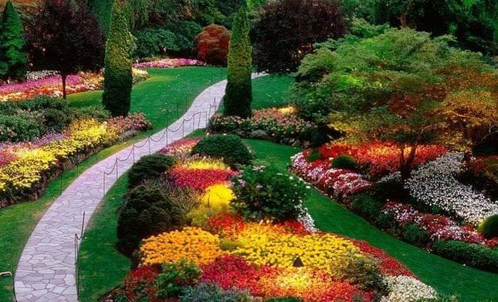 большие светлые цветы в ландшафтном дизайне дачи