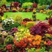 большие необычные цветы в ландшафтном дизайне розария фото