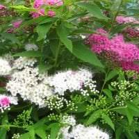 небольшие яркие цветы в ландшафтном дизайне клумбы картинка