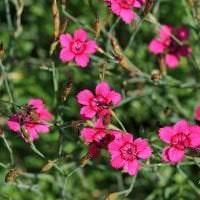 небольшие красивые цветы в ландшафтном дизайне клумбы картинка