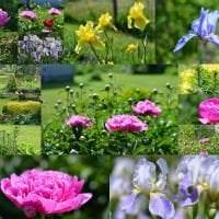 маленькие яркие цветы в ландшафтном дизайне клумбы картинка