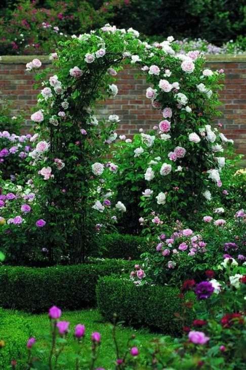 большие светлые цветы в ландшафтном дизайне розария