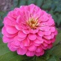 небольшие светлые цветы в ландшафтном дизайне розария фото
