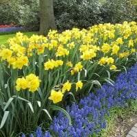 большие необычные цветы в ландшафтном дизайне дачи картинка
