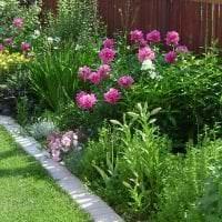 маленькие необычные цветы в ландшафтном дизайне загородного дома картинка
