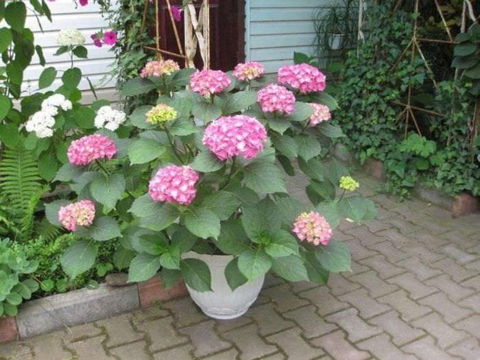 маленькие яркие цветы в ландшафтном дизайне загородного дома