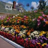 большие светлые цветы в ландшафтном дизайне дачного участка фото