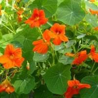 небольшие красивые цветы в ландшафтном дизайне розария фото