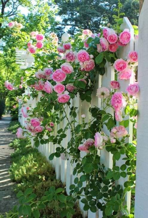 небольшие необычные цветы в ландшафтном дизайне розария