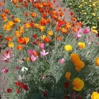 маленькие яркие цветы в ландшафтном дизайне клумбы фото