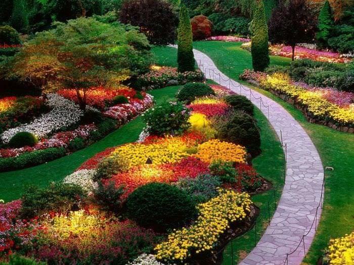 большие красивые цветы в ландшафтном дизайне дачного участка