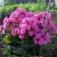 небольшие яркие цветы в ландшафтном дизайне розария фото