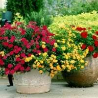небольшие необычные цветы в ландшафтном дизайне дачи фото
