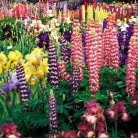 большие красивые цветы в ландшафтном дизайне дачного участка картинка