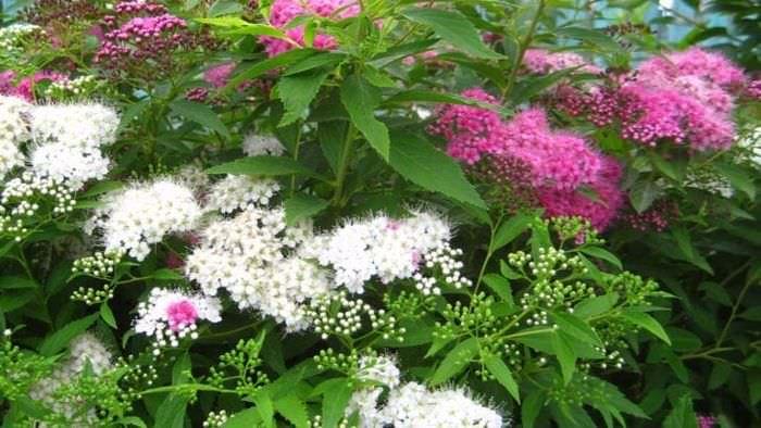 большие необычные цветы в ландшафтном дизайне загородного дома