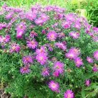 маленькие красивые цветы в ландшафтном дизайне дачного участка фото