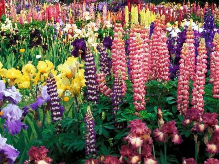 небольшие яркие цветы в ландшафтном дизайне дачи