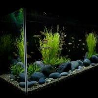 вариант оригинального декорирования аквариума фото