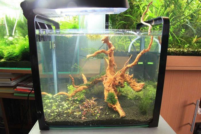 вариант оригинального украшения аквариума