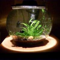 идея красивого оформления аквариума фото