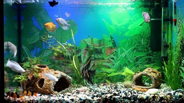 идея необычного декорирования домашнего аквариума