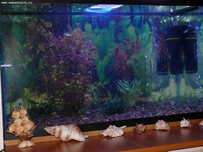 вариант красивого декорирования домашнего аквариума