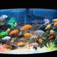вариант красивого украшения домашнего аквариума фото