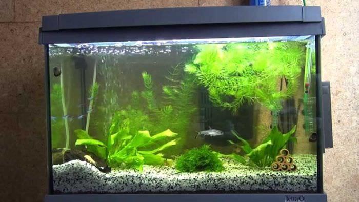 идея необычного украшения аквариума