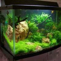 вариант яркого декорирования аквариума картинка