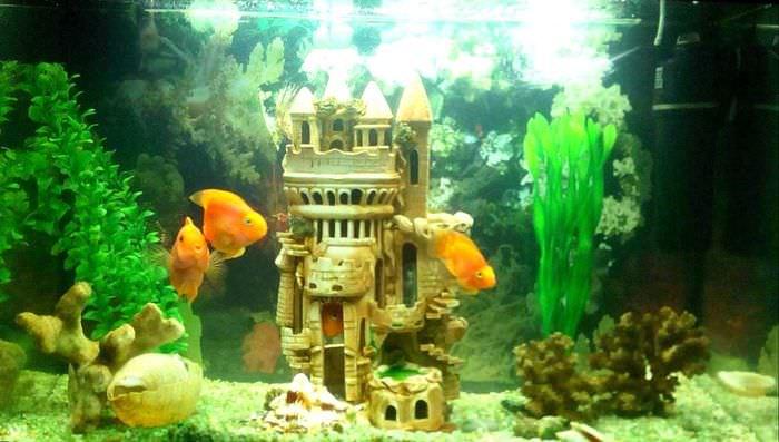 вариант необычного декорирования аквариума