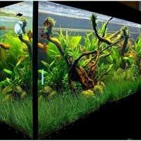 идея яркого оформления домашнего аквариума картинка
