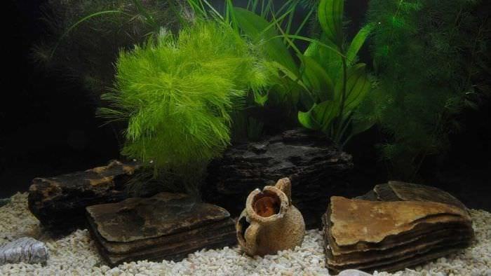 вариант яркого оформления домашнего аквариума