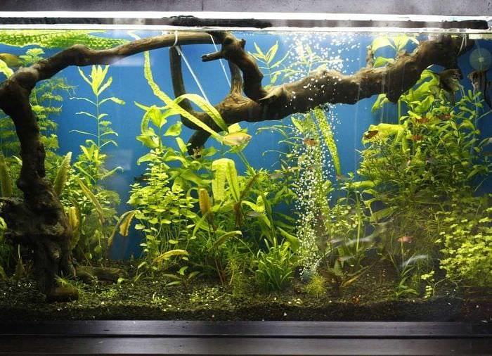 Как украсить аквариум своими руками фото 79