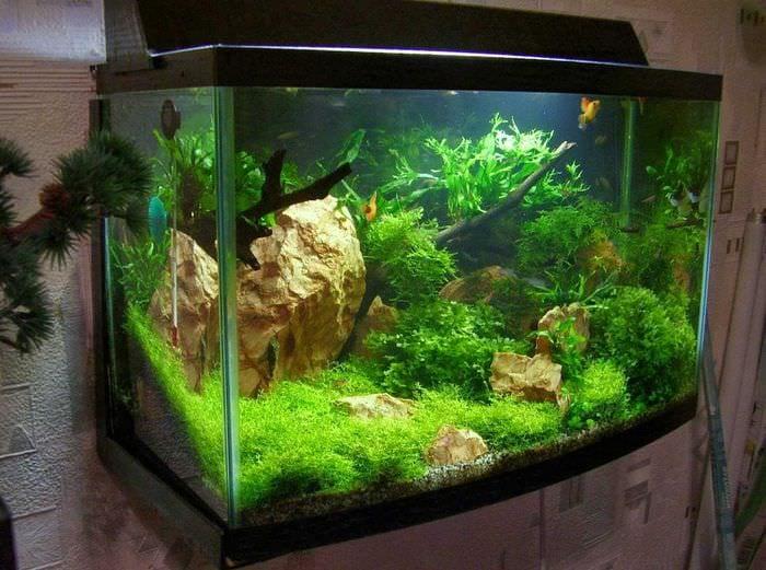 идея оригинального декорирования домашнего аквариума