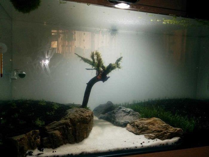 вариант необычного оформления аквариума