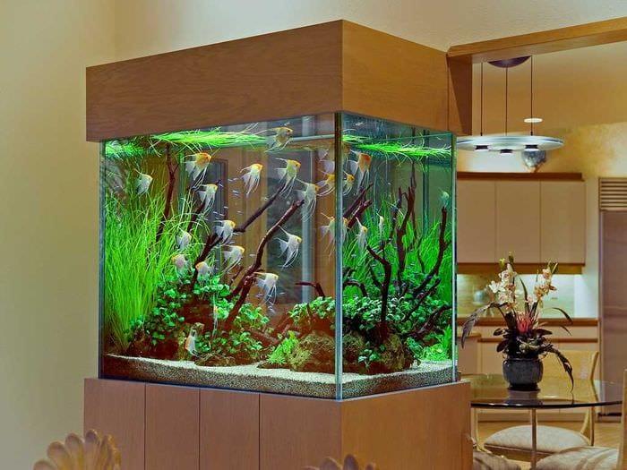 идея красивого декорирования домашнего аквариума