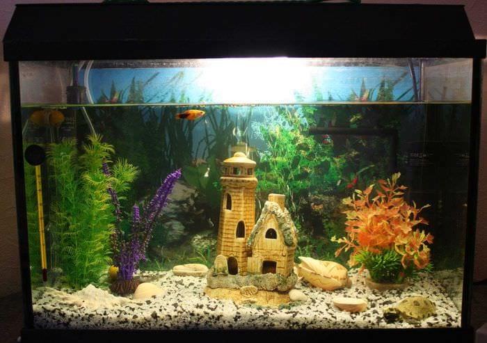 Как красиво оформить аквариум своими руками