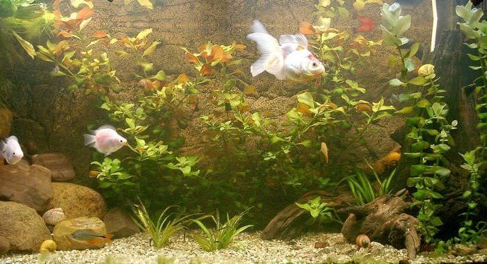 идея яркого оформления домашнего аквариума