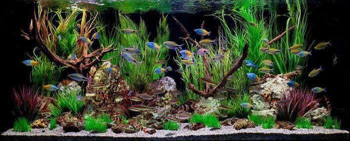 вариант красивого декорирования аквариума