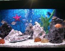 вариант яркого украшения аквариума картинка