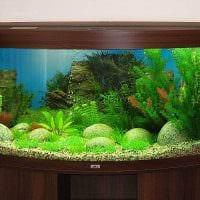 вариант оригинального декорирования домашнего аквариума картинка
