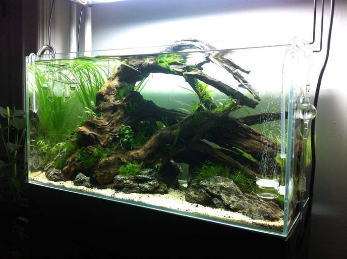 идея яркого декорирования домашнего аквариума