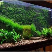 вариант необычного украшения домашнего аквариума картинка