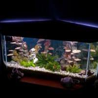 идея красивого оформления аквариума картинка
