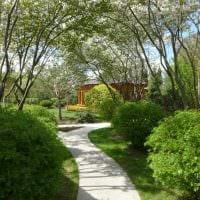 пример применения светлых растений в ландшафтном дизайне дачи фото