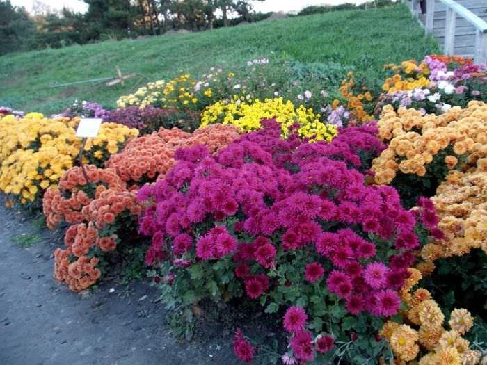 пример применения ярких растений в ландшафтном дизайне дачи