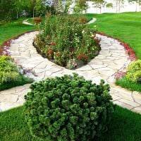 вариант использования светлых растений в ландшафтном дизайне дома картинка