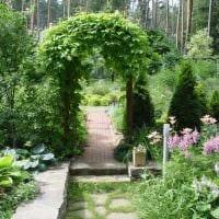 вариант применения светлых растений в ландшафтном дизайне дома картинка
