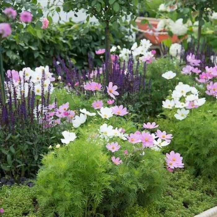 вариант применения красивых растений в ландшафтном дизайне дачи