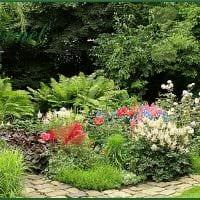 идея применения необычных растений в ландшафтном дизайне дома картинка